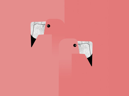 GRAPHICAL BIRDS