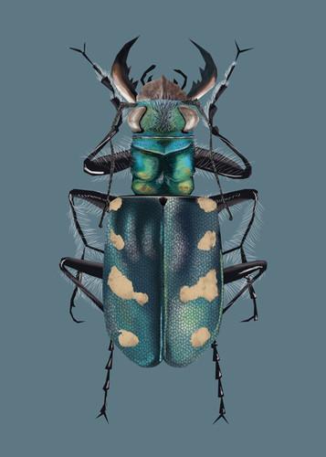 ap - beetle.jpg