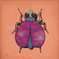 INSECT 09.jpg