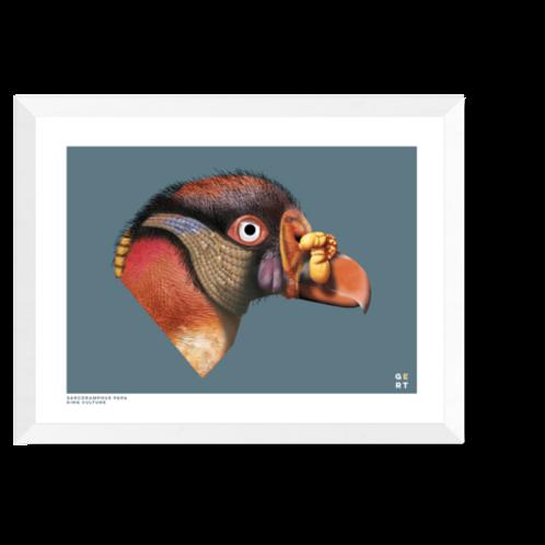 Artprint 'King Vulture'