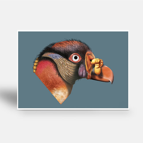 postcard 'King vulture'