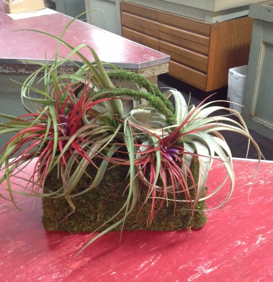 purse w tillandsias_edited