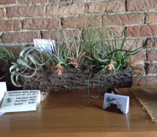 tillandsia arrangement log