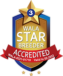 Willow Ridge Labradoodles Accredited.png