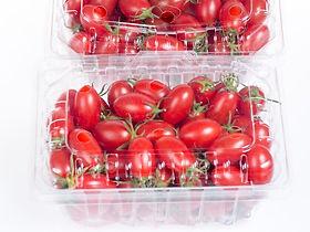 contenitori per laimenti in plastica trasparente