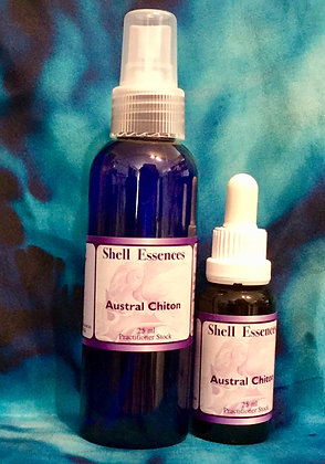 Austral Chiton spray and stock (with card)