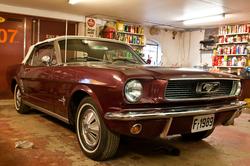 Mustang på Mustang Farm