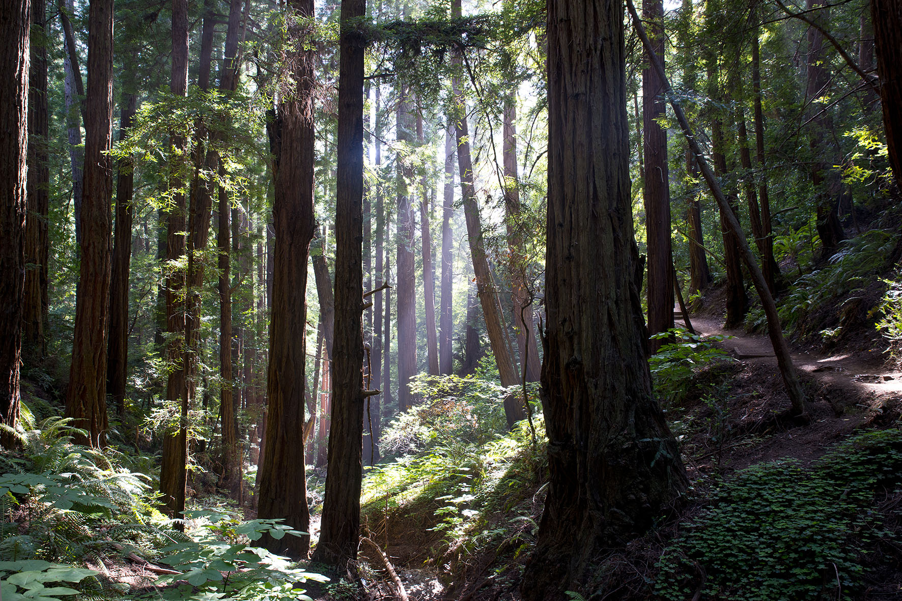 California // Muir Woods