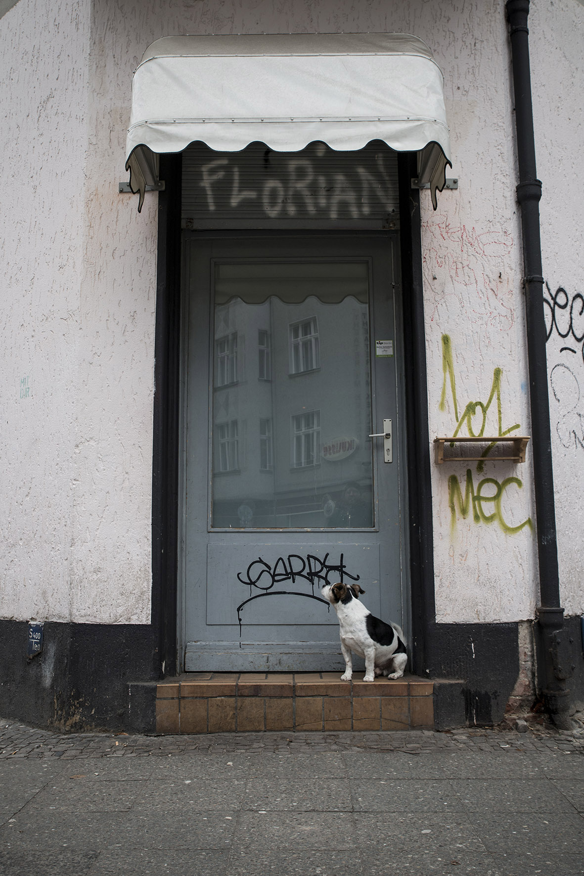 Berlin // Dog City