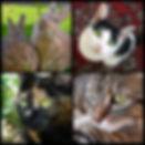 Munchkinmay Pets Rabbits Cats