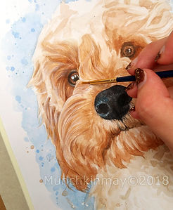 Cavapoo wip Aug 2018 close 4 wm.jpg