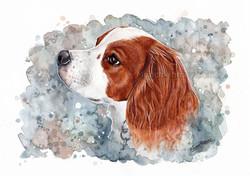 Cavalier/Brittany Spaniel