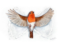 Robin angel