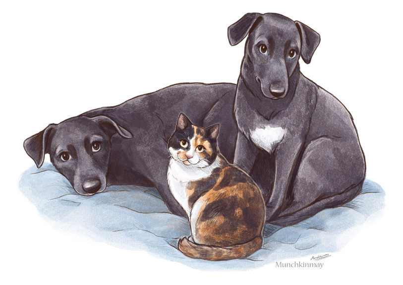 Custom digital pet illustration