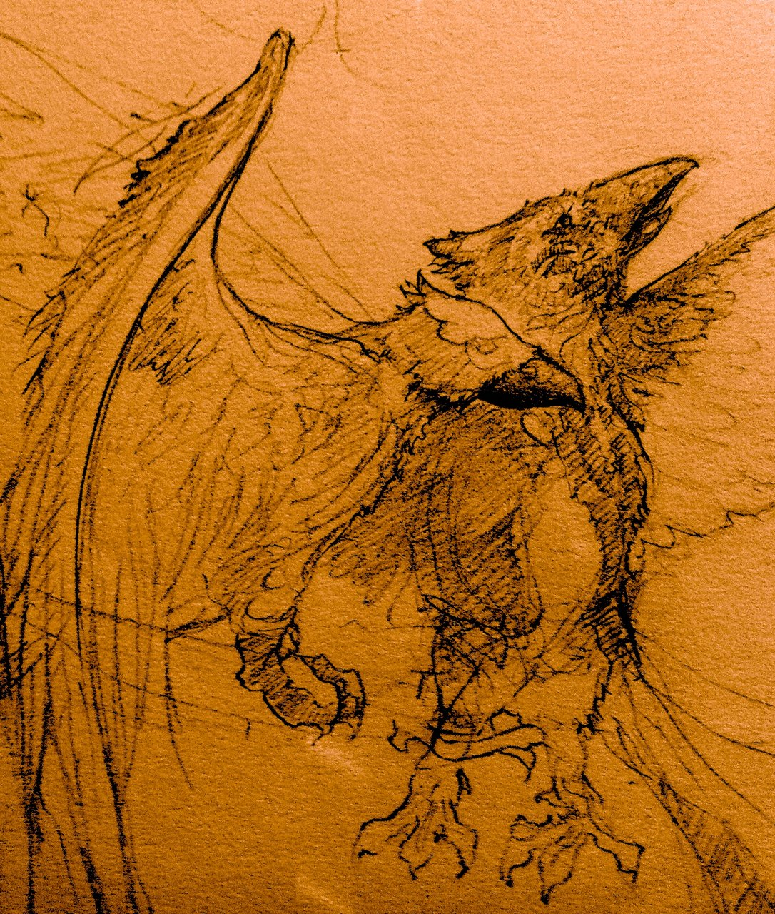 Raptors sketch