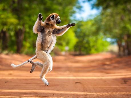 MADAGASCAR | Mondo fuori dal tempo