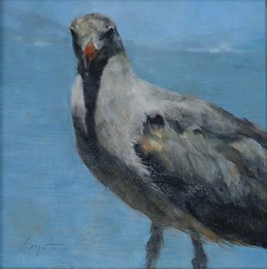 San Francisco Bay Bird