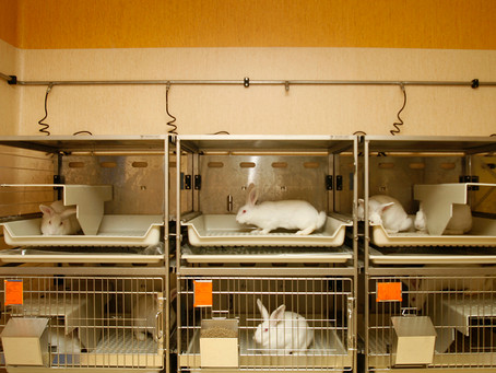 Recommendations on the report of the European Commission Scientific Conference 'Non-Animal Approache