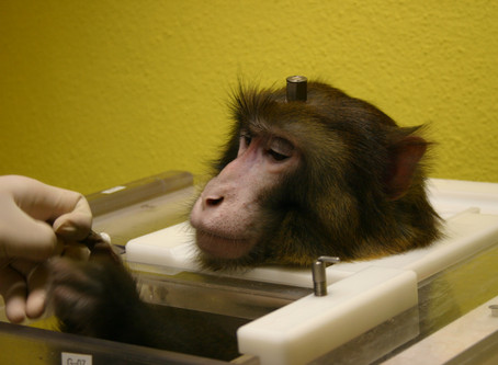 Neuroscience research on macaques at the Max Planck Institute, Tubingen (MPI): A reply to the BUAV