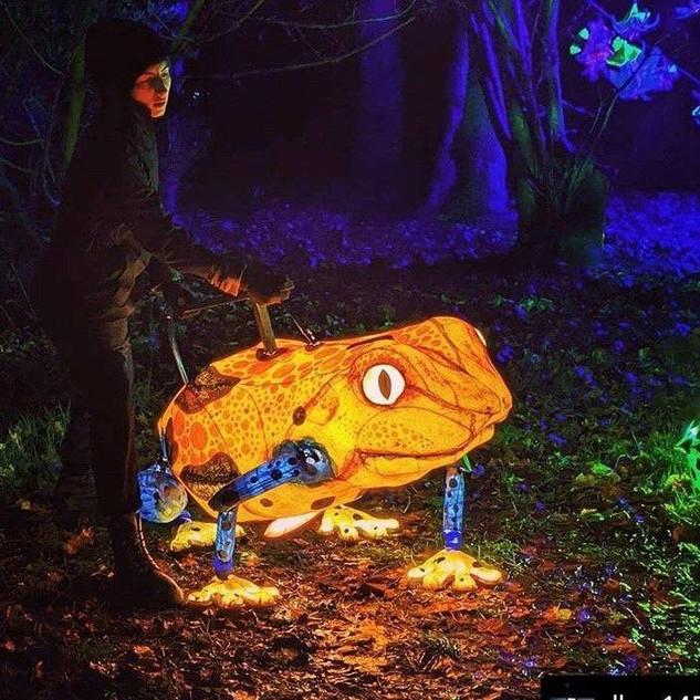 Lantern Frogs