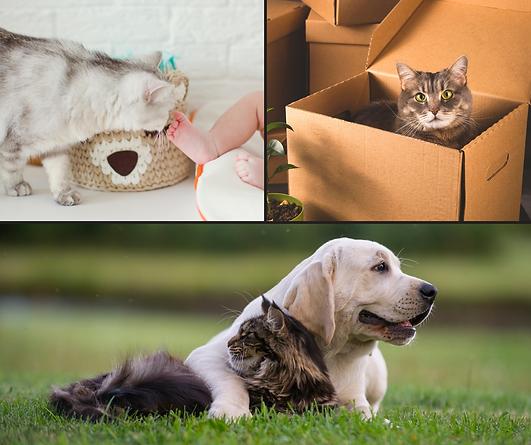 Laisser votre chat chez lui (11).png