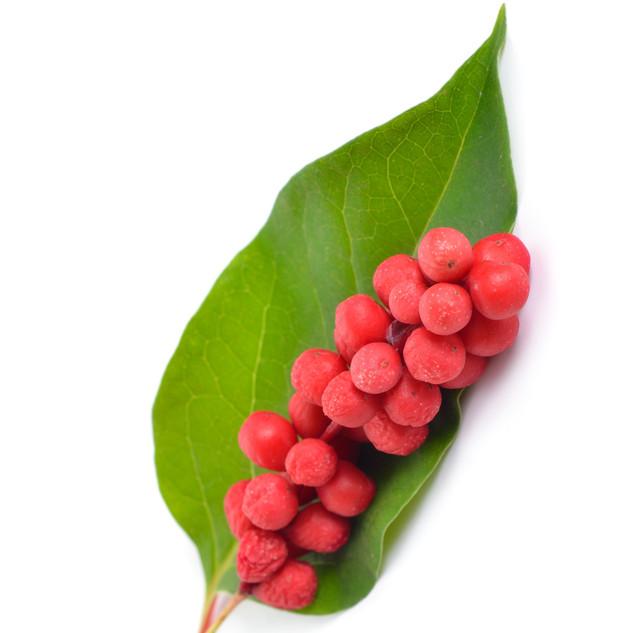 Schisandra%20berries%20stock%20photo_edi