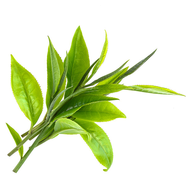 Green tea leaves stock photo.jpeg
