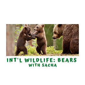 International Wildlife- All About Bears