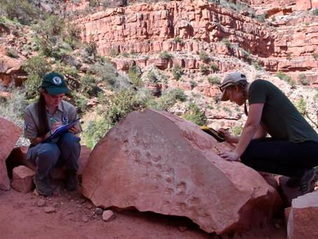 Rock fall at Grand Canyon Reveals Ancient Animal Footprints