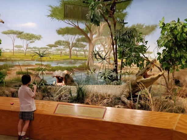 Gary & Matthew Primm African Savanna Gallery