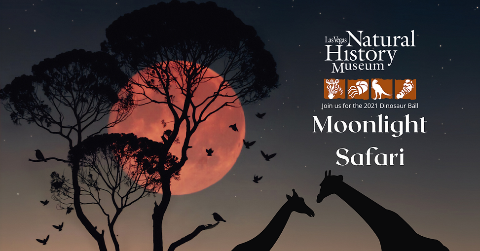 Moonlight Safari for Wix Page (3).png