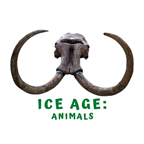 What Happened to Ice Age Animals