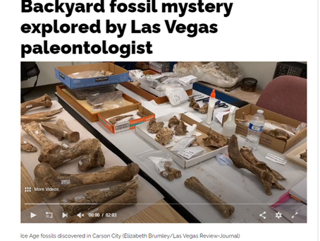 Backyard fossil mystery explored by Las Vegas paleontologist