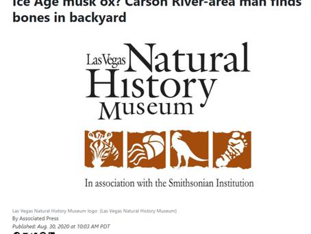Ice Age musk ox? Carson River-area man finds bones in backyard