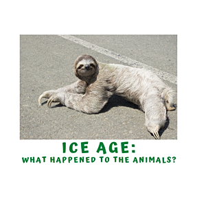 Why Learn About Ice Age Animals?