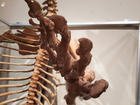 Kalifano's Prehistoric Cave Bear Finds a Home at the Las Vegas Natural History Museum