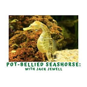 Marine Week- Potbelly Seahorses with Jack Jewell