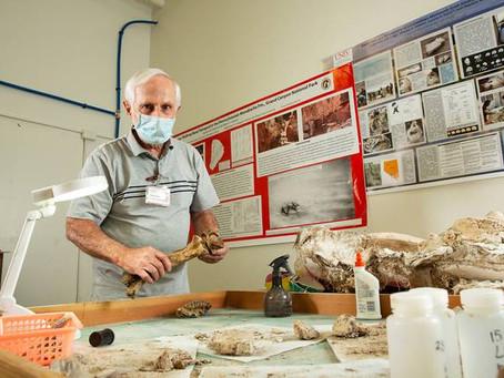 UNLV professor says Grand Canyon reptile tracks among earliest on earth