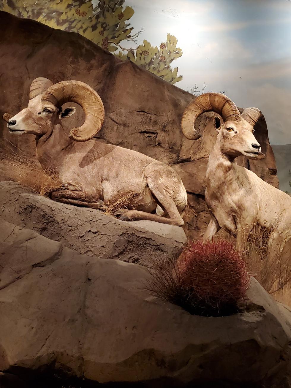 E. L. Wiegand Foundation Wild Nevada Gallery