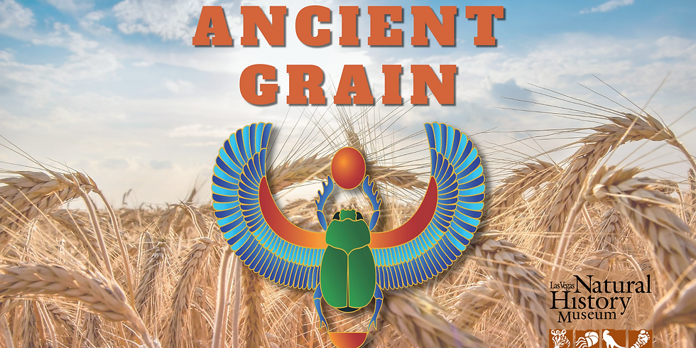 Ancient Grain: Wheat Grinding Activity