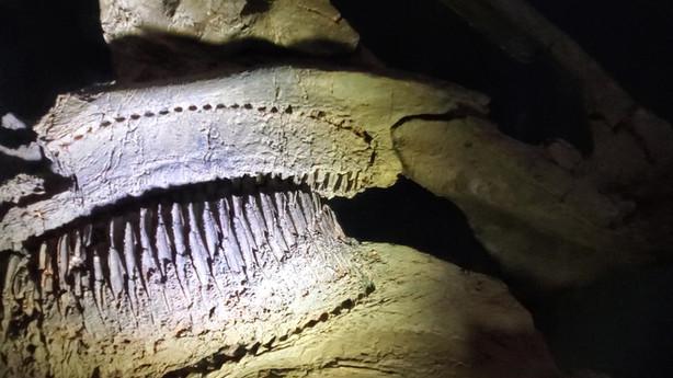 Dinosaur Mummy CSI: Cretaceous Science Investigation