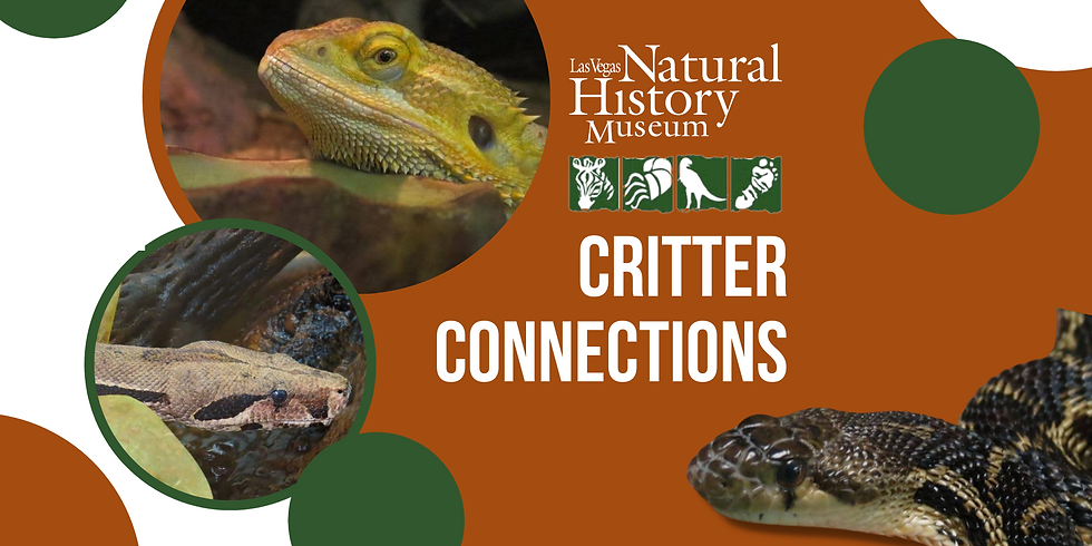 Critter Connections - Sunday Morning
