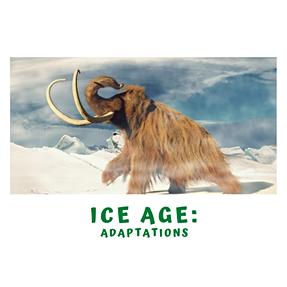 Ice Age Adaptations