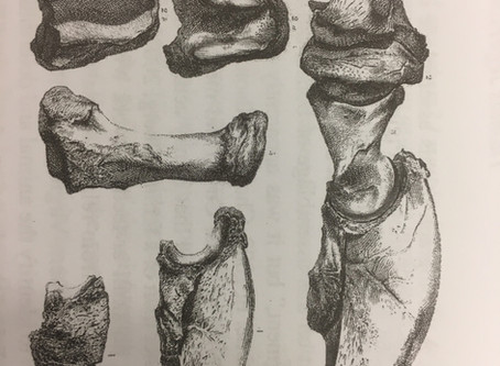 Fossil Bones and the Presidential Election of 1796 ― Part II