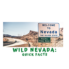 A Quick Minute in Wild Nevada