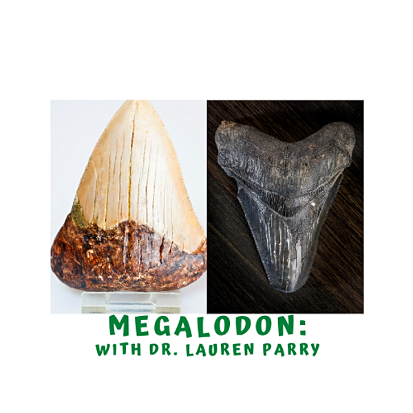 Marine Week - Megalodon with Dr. Lauren Parry
