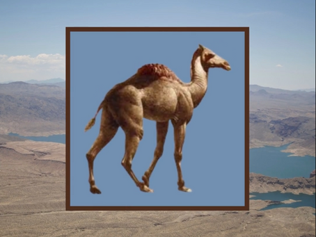 Camels in Southern Nevada's Fossil Record
