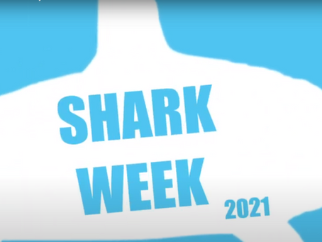Shark Week: Biggest and Smallest Sharks in the World!