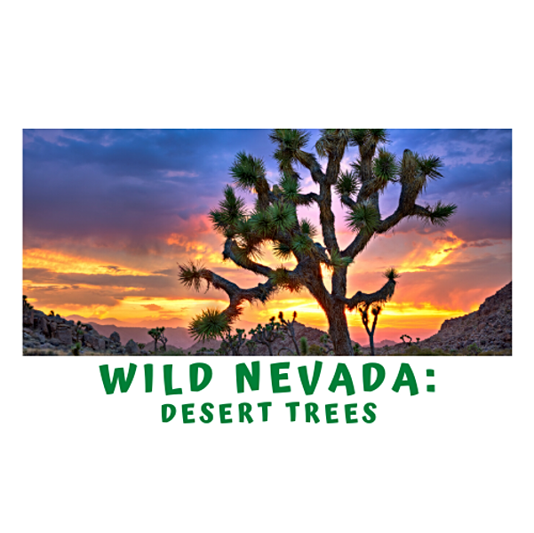 A Quick Minute in Wild Nevada- Desert Trees with Dr. Lauren Parry