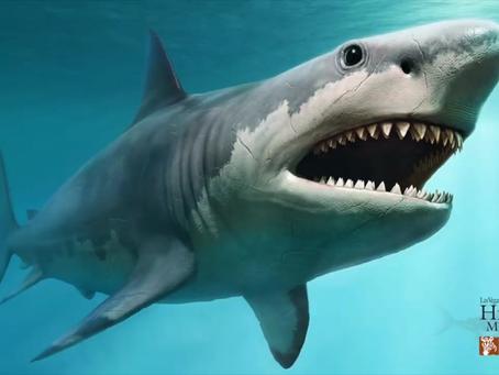 Shark Week: Megalodon